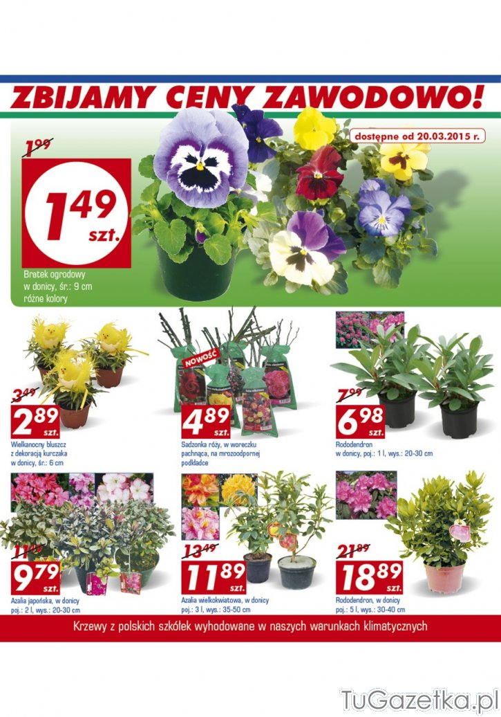 Wiosenne Kwiaty W Doniczkach Auchan Ogrod Tugazetka Pl